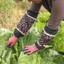 冬野菜の収穫の様子(白菜)