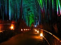 嵐山・嵯峨野 竹林の道