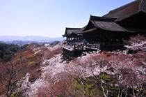 周辺観光:清水寺