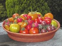 色んな種類のトマト