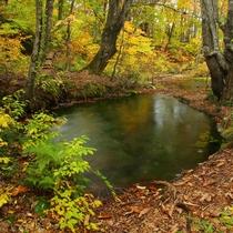 *【獅子ヶ鼻湿原】鳥海山の北側にあり、「あがりこ大王」など奇形巨木群が広がる神秘的な森です。