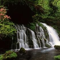 *【元滝伏流水】白い水と緑の苔が大変きれいで心が癒されます。