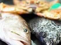 丹後の地魚「クエとイシガキダイ」