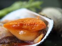 丹後の赤貝