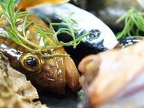 地魚「ヨネズ(キジハタ・アコウ)」