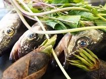 春は山菜が美味しい季節