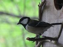 野鳥の宝庫