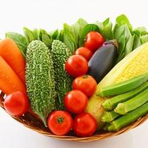 夏野菜イメージ