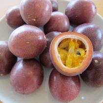 沖縄の果実 パッションフルーツ