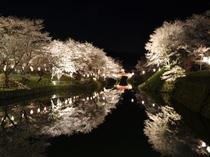 鹿野城跡 桜まつり(春)