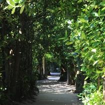 【備瀬のフクギ並木 車で5分】 静かな別世界が広がる並木道
