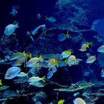 美ら海水族館 小さな魚も魅力的  【車で10分】