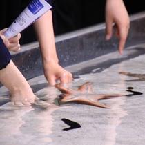 【美ら海水族館】イノーの生き物たち。ヒトデなどに触ることができます