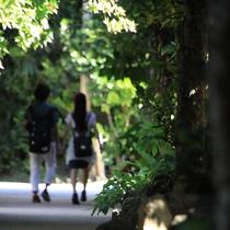 【備瀬のフクギ並木】 のんびりと散策するのに最適