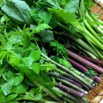 *【食材】山菜や野菜など、豊富な山の幸が自慢です。