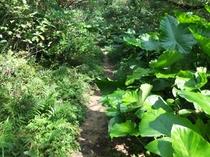 東洋のガラパゴスと言われる奄美。奄美ならではの自然や原生林がみられます。