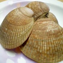 *陸前高田市の幻の貝、エゾイシカゲ貝。旨味と甘味が濃厚な陸前高田市自慢の食材です。