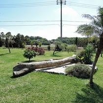 *【施設設備】ヤシの木など南国らしい雰囲気が演出されています。