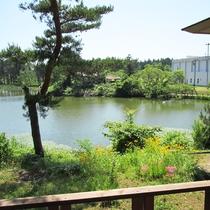 *【周辺】当館前の池。四季折々、様々な表情を見せてくれます。