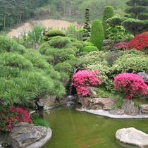 松が美しいお庭