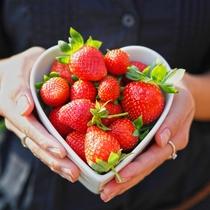 車で約10分の場所にある丹波たぶち農場ではイチゴ食べ放題をお楽しみいただけます
