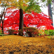 観光地の喧噪を離れて、歴史と伝統あふれる篠山の社寺や町並みを彩る、紅葉、銀杏を巡る癒しの一時を