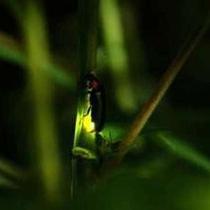 初夏の夜を彩るホタルの光と虫の音に耳を傾けて、ごゆっくりと自然のままの美しさをご堪能ください。