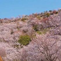 """九州随一の本数を誇る""""花立公園""""は当館から車で約15分★"""