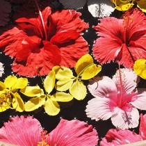 沖縄の花々
