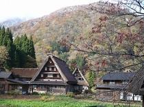 紅葉の木と菅沼