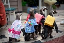 イルカランドのペンギンお散歩タイム♪