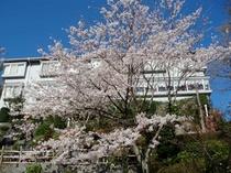 桜の咲いてる時の外観