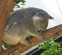【観光】東山動物園