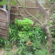 坪庭:小さいながらも季節の移ろいを感じさせます