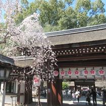 桜の名所として有名な平野神社(宿から徒歩5分)