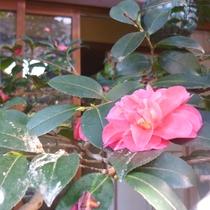 坪庭:季節ごとに咲く花が彩りを与えます