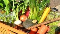 旬の食材(秋冬)。 西湘地域産100%無農薬、露地栽培にこだわった農家さんからの仕入れております。