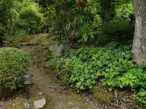 お庭の散歩道
