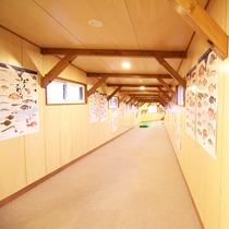 *【施設/廊下】壁には湖に生息する希少な魚のポスターが飾ってあります。
