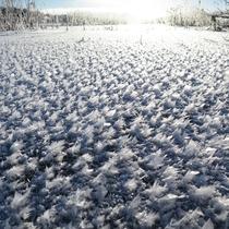 *【周辺】湖が凍結する時、神秘的な光景「フロストフラワー」がご覧いただけるかも!?
