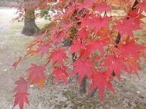 聖福寺の紅葉