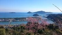 南郷城跡・桜