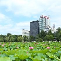 外観(夏/不忍池蓮の花)