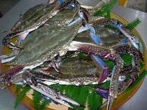 答志島産のワタリ蟹