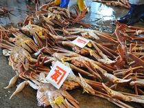 【越前蟹】生き蟹!直接競りに向かいかねとも水産が競り落とした越前蟹です
