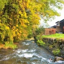 川沿いのお部屋ではウッドデッキから自然豊かな川のせせらぎを愉しむ事ができます。