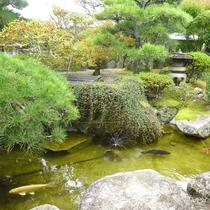 庭の池には鯉が泳いでおります
