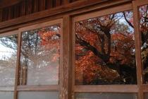 【秋】紅葉が美しいです。