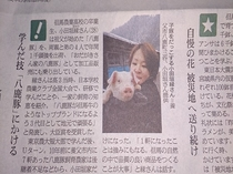 「おだがきさん家の八鹿豚」の新聞記事です(朝日新聞さんより)