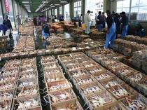 津居山蟹の写真
